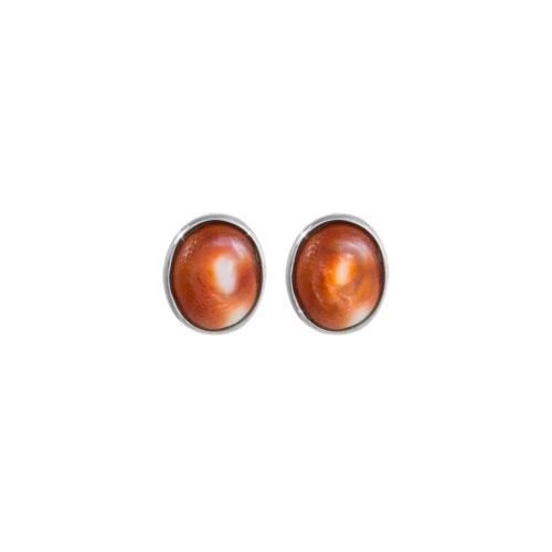 Natural Seashell Earrings, Eye of Saint Lucia In White Gold